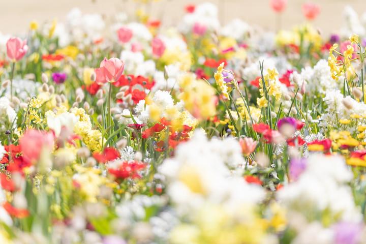 spring201943FTHG7177_TP_V.jpg