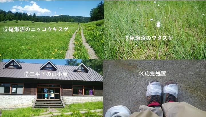 尾瀬2.jpg
