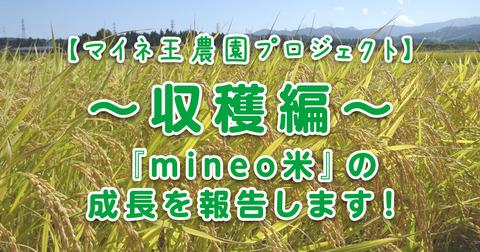 【マイネ王農園プロジェクト】~収穫編~『mineo米』の成長を報告します!(8月~9月)