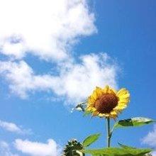 太陽の羽根
