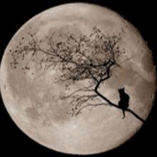metal_moon