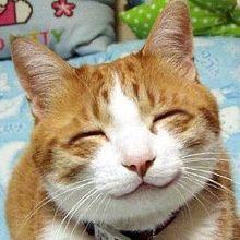 笑いネコのヨッシー