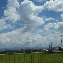 SHIRAINU(仮)