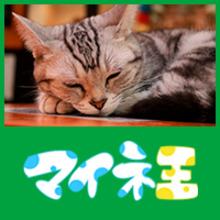 猫屋@運営事務局